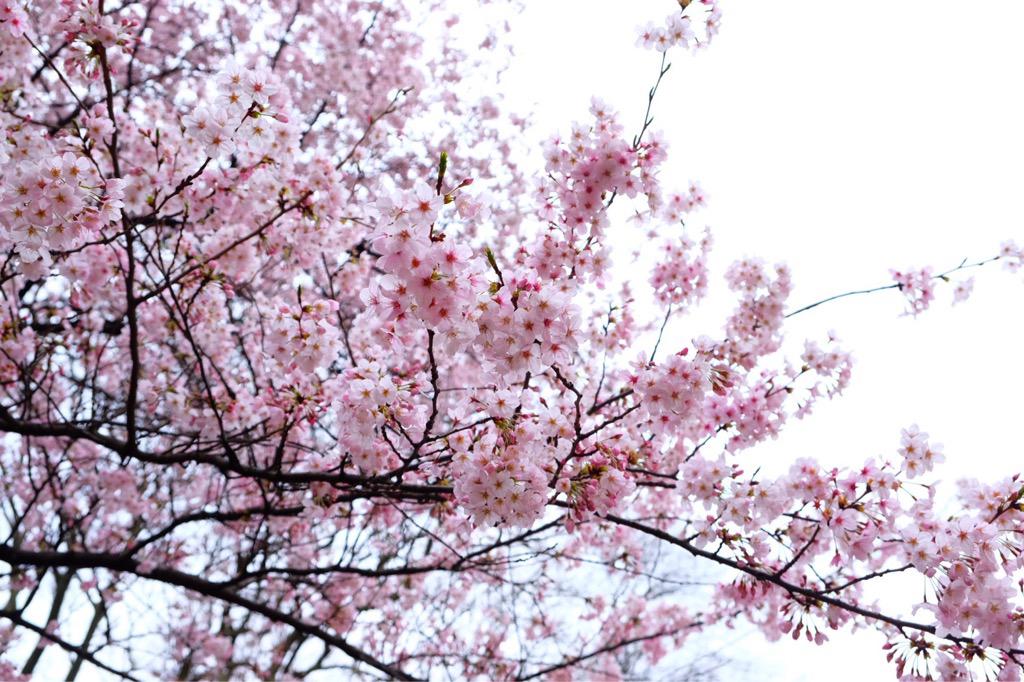 一足早く満開の訪れ!春の愛されカラー...の写真