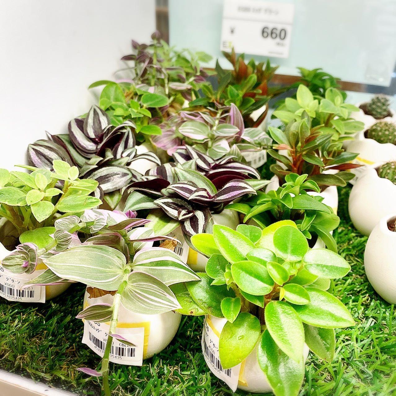 「植物大きくなりました!」の写真