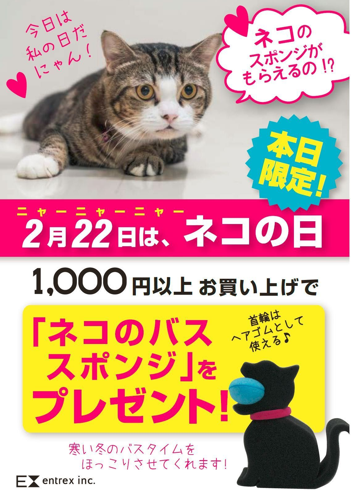 「スポンジプレゼント!【キャンペーン】」の写真