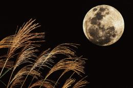 秋の夜長と