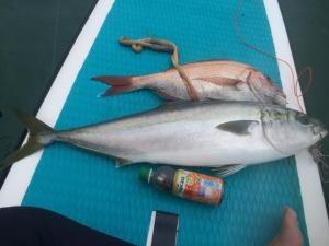 サップで釣った魚